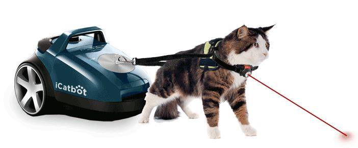 chat aspirateur