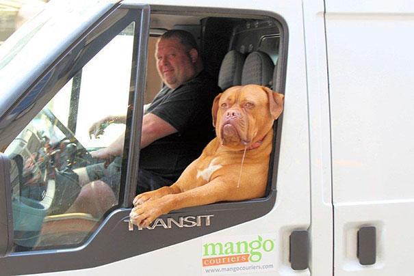 photo chien camionnette