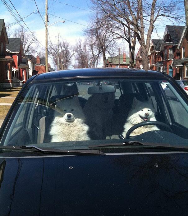 photo chien voiture