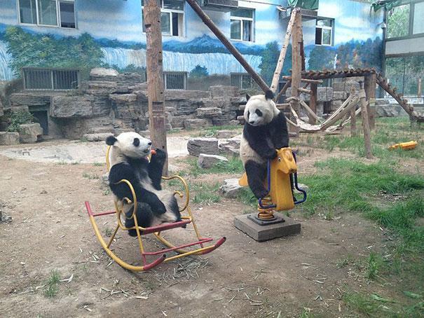 photo panda balancoire