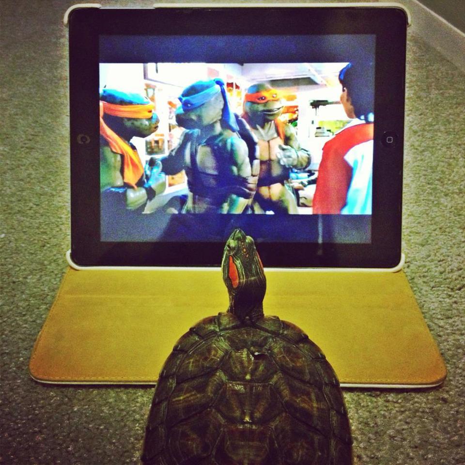 vraie tortue ninja
