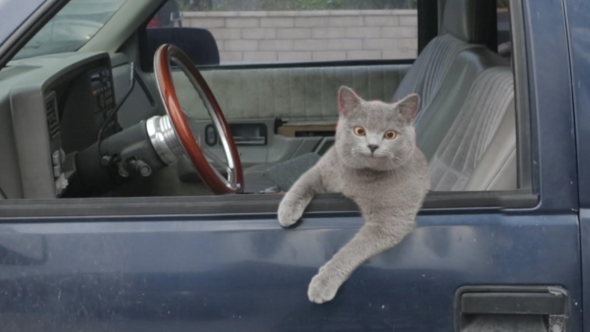 Sauter par dessus une voiture conduite par un chat ?!